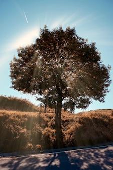 自然の中の茶色の木、森の中の紅葉