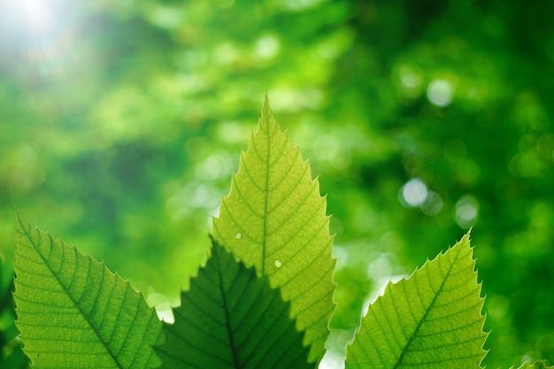 Зеленые листья дерева текстурированные осенью в природе, зеленый фон