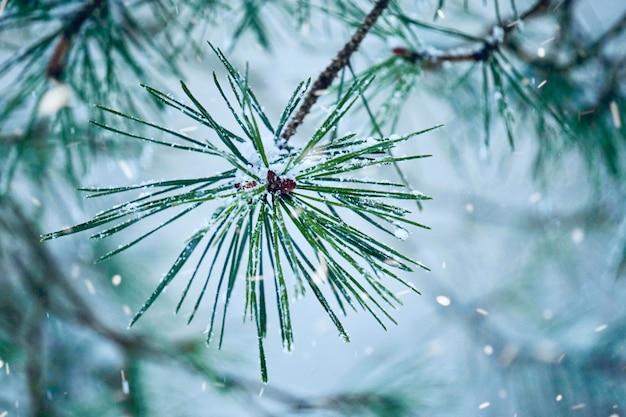 冬の季節、白く寒い日には植物に雪が降る