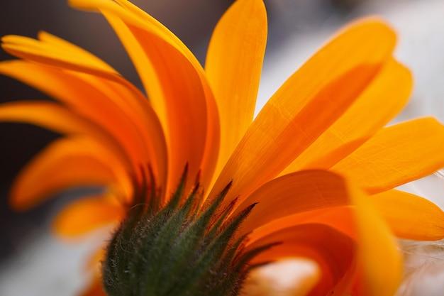 自然の中の美しいオレンジ色の花