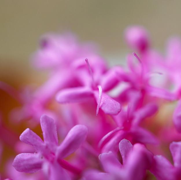 庭でロマンチックなピンクの花