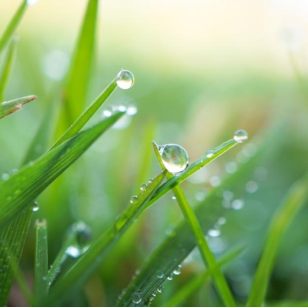 Капли дождя на зеленой траве растения в саду