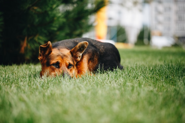 草に横たわっている犬