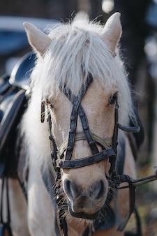 Портрет бежевого коня с уздечкой крупным планом
