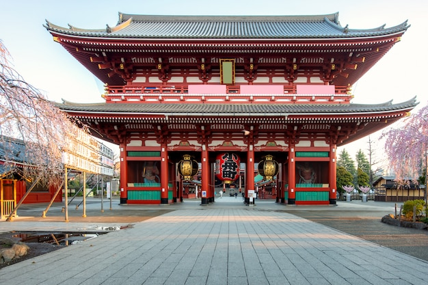 東京の浅草地区で春の朝に桜の木と浅草寺の門。