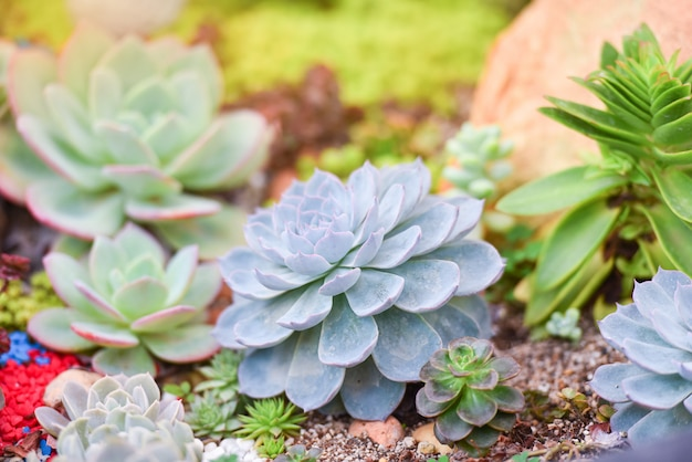 多肉植物様々な種類の美しい庭で育つ