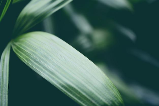Пальмовые листья тропических растений крупным планом зеленый лист в листве джунглей