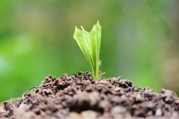 Рост молодых растений на нейтральной зелени