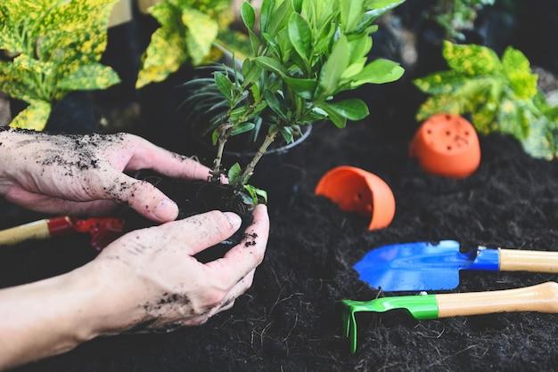 庭に植えるために手で植える