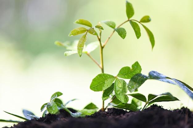 Полив растений с посадкой деревьев на почве природы зеленого сада и капли воды на листьях