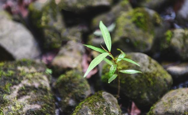 小川の川の自然の近くの石の上に成長している小さな植物の木