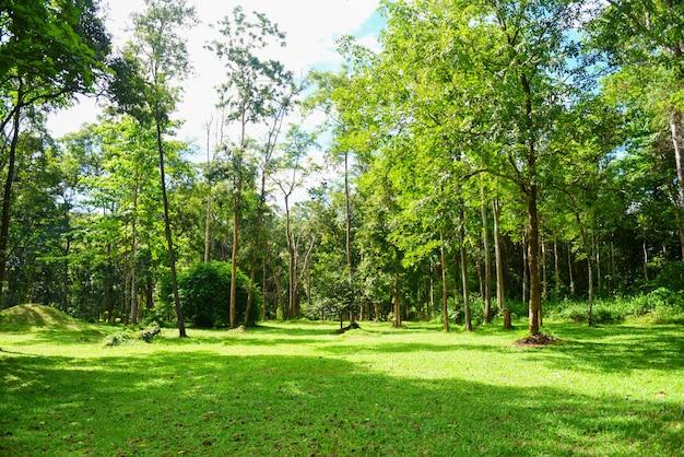 緑豊かな公園夏の木とフィールドの屋外で美しい日の出木/庭の牧草地とエコロジー緑の自然環境で明るい晴れた日