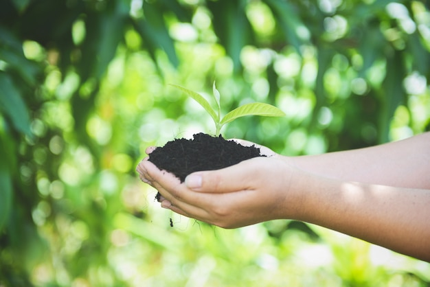 苗木を植える若い植物は、環境を助ける女性の手で土壌に成長しています。