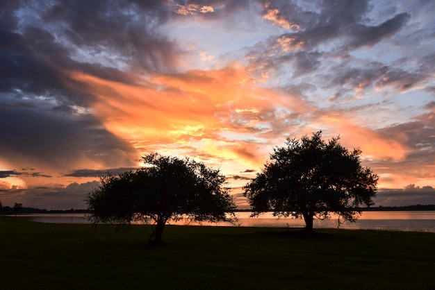 夕日の木の美しい風景