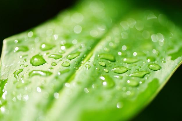 Капля воды на листьях в лесу. капля росы утром на листе с солнечным светом после дождя