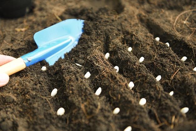 菜園農業の土壌にカボチャの種を植える手。ガーデニング作品のコンセプト。クローズアップ、セレクティブフォーカス