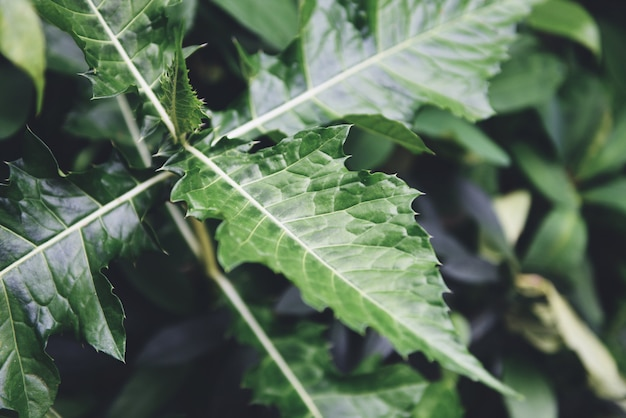 自然の緑の葉のパターンの背景。熱帯林の植物のジャングルで美しい葉