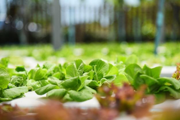 水耕栽培の若い野菜の新鮮な緑のレタスのサラダ
