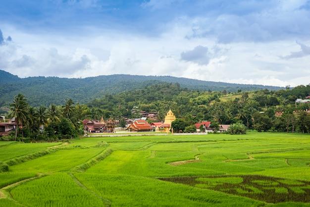 Взгляд пейзажа зеленого рисового поля с старым виском в пагоде и горе таиланда золотых