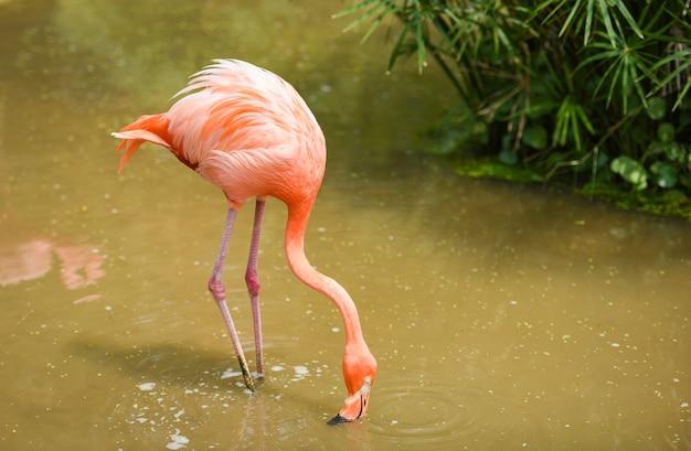 Фламинго апельсиновый на природе зелёное тропическое растение