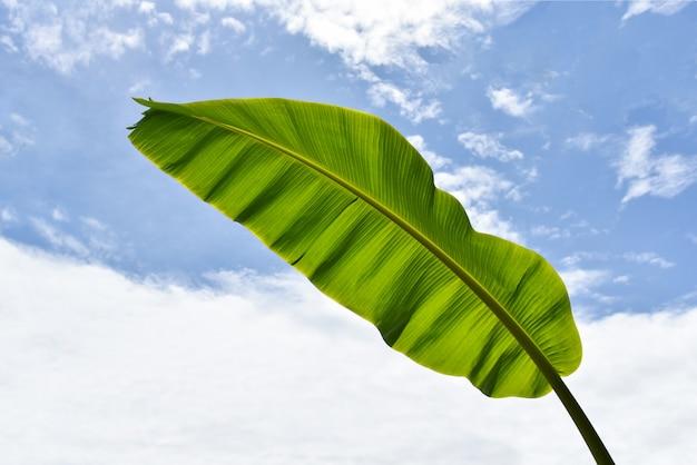 新鮮なバナナの葉と緑の熱帯植物の自然