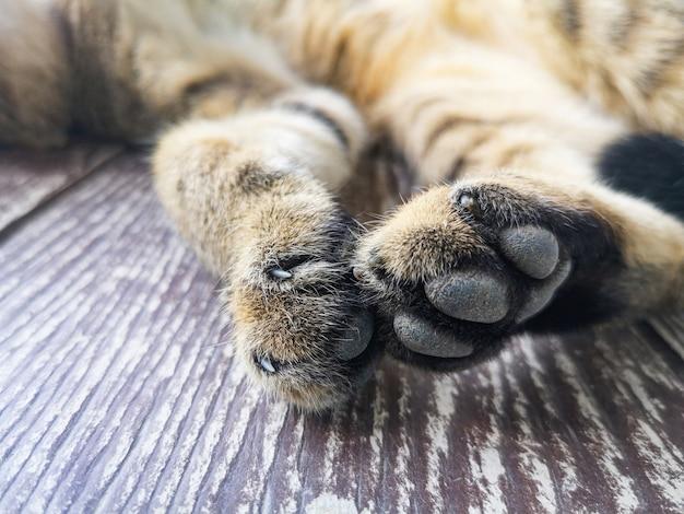 猫の足-足のクローズアップと猫の足の爪