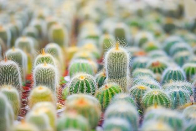 庭に飾るミニチュアサボテンポット-さまざまな種類の美しいサボテン市場またはサボテン農場