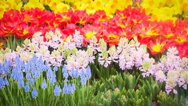 庭の色とりどりのチューリップの花の装飾-美しいチューリップフィールドに咲く春の花の背景