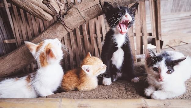 Группа котят, играющих в загородном доме - симпатичные маленькие кошки многоцветные, лежа на полу