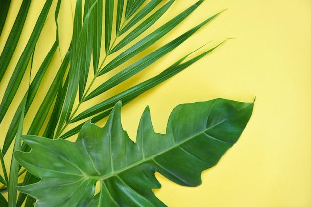 Зеленые листья тропических растений пальмы и лист филодендрона