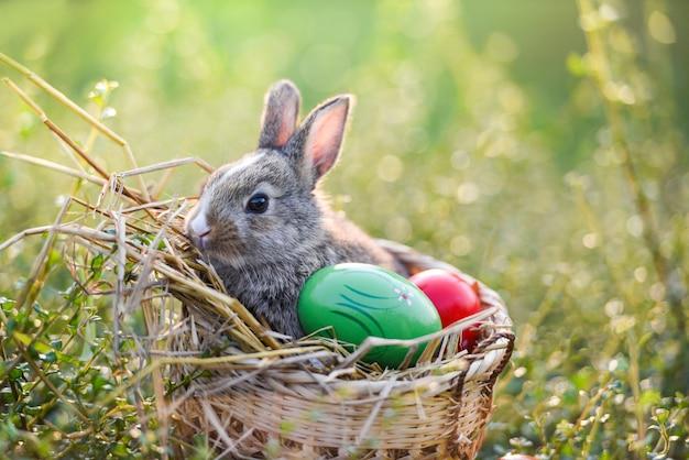 イースターのウサギとイースターエッグウサギのバスケットの芝生の上に座って