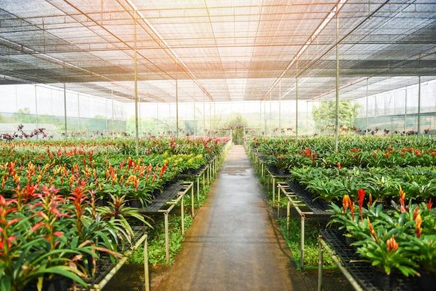 アナナスの花と蘭の保育園の観賞用と緑の植物が成長し、屋根の下の庭の温室にぶら下がっています