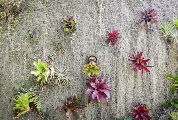 ホームガーデニングと室内のグリーンハウス環境の装飾秘密の庭とモダンなガーデニングのセットアップ花と植物、生きた壁のアナナスとスペイン苔