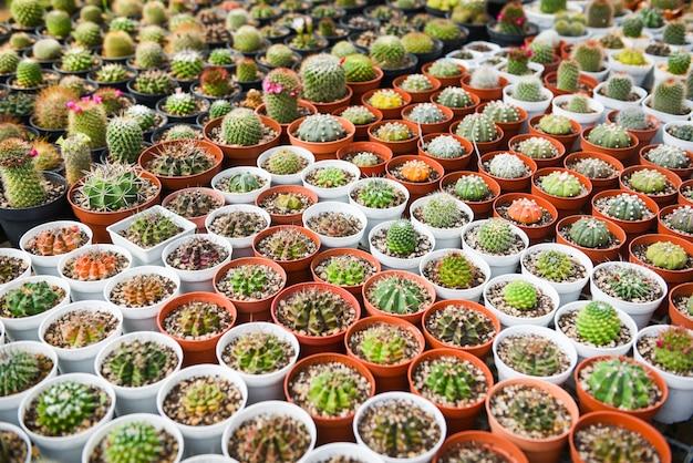 庭で飾るミニチュアサボテンポット-さまざまな種類の美しいサボテン市場またはサボテン農場