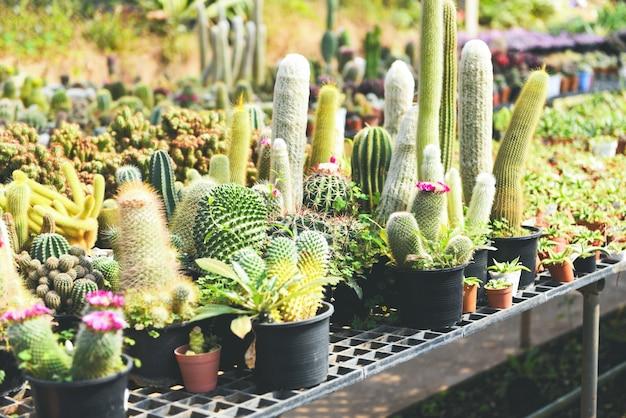 サボテンポットは庭でさまざまな種類の美しいサボテン市場またはサボテン農場を飾る