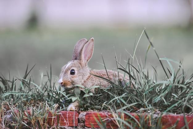 Кролик коричневый кролик на зеленой траве. кролик пасхальная концепция