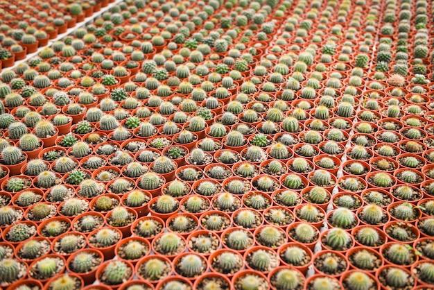 さまざまな種類の美しいサボテン市場またはサボテン農場。庭に飾るミニチュアサボテンポット