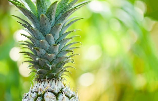 自然の背景に新鮮なパイナップル