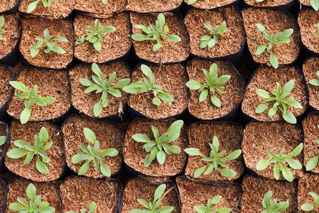 庭で育つ小さな植物