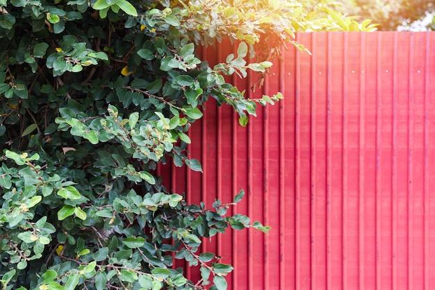 夏の木と亜鉛の赤いフェンス