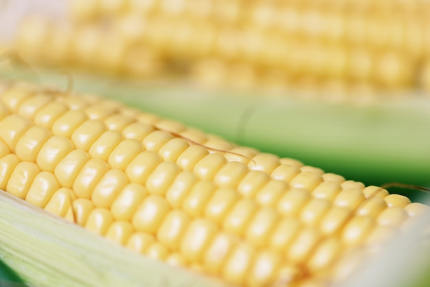 トウモロコシの穂軸とスイートコーンの耳