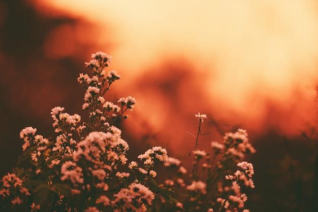 Винтажный силуэт цветка на природе захода солнца или восхода солнца