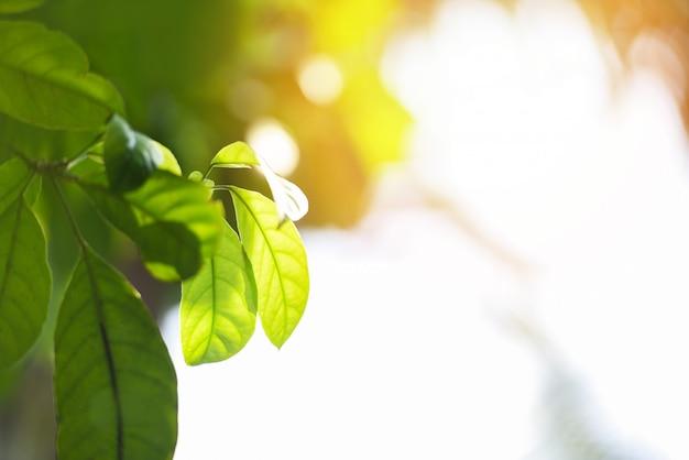 庭のエコロジーでぼやけた日光の自然の緑の葉