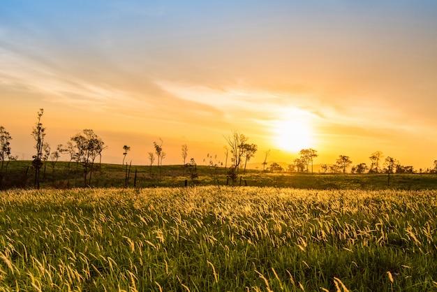 田舎の田舎道と木とフィールドと草原の緑の芝生に沈む夕日