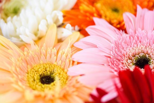 Свежие весенние цветы букет растений герберы хризантема разноцветный цветок