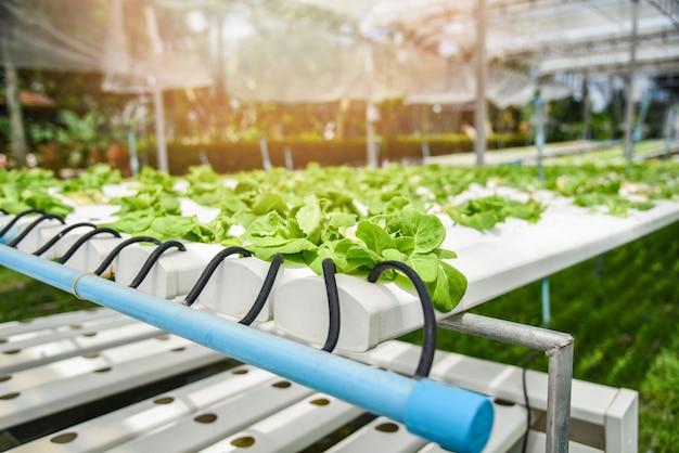 水耕栽培システム若い野菜と新鮮なグリーンバターレタスのサラダ栽培庭の水耕栽培農場の植物