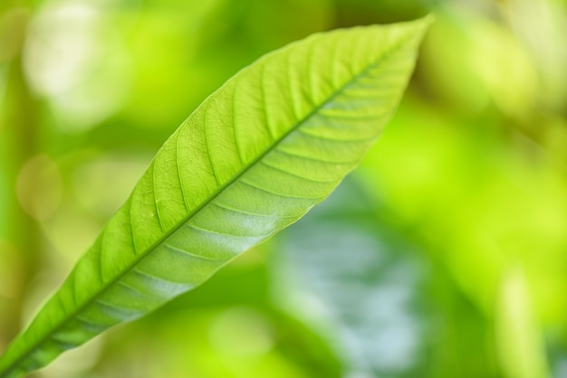 庭のエコロジーでぼやけている日光の背景に自然の緑の葉新鮮な葉の木