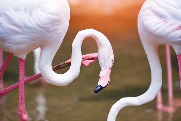 Фламинго птица розовый красивый у озера река природа