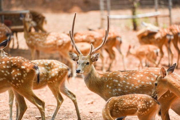 国立公園内の斑点を付けられたシカの野生動物