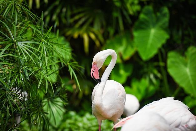 Фламинго птица красивая на озере река природа тропических животных - большой фламинго